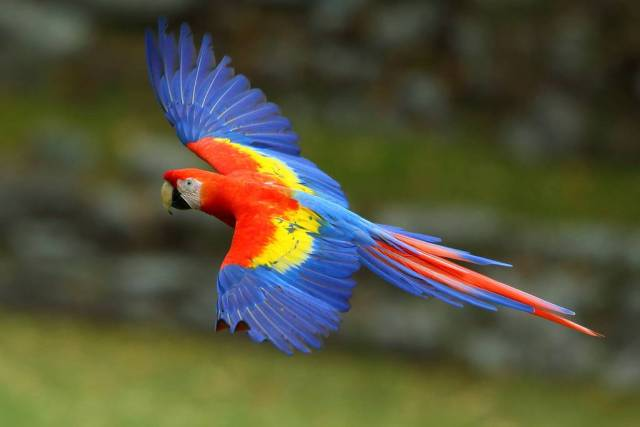 Scarlet-Macaw-by-Adam-Riley.jpg