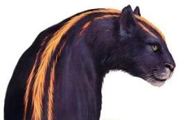 firepelt-cougar-kibb